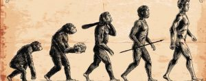 How true is it that human evolved from Apes?