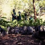 Ghanaians plant 5m trees to fight forest depletion